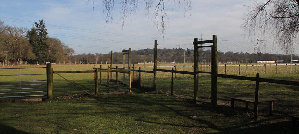 Farm based boarding facilities set in the beautiful Surrey countryside.