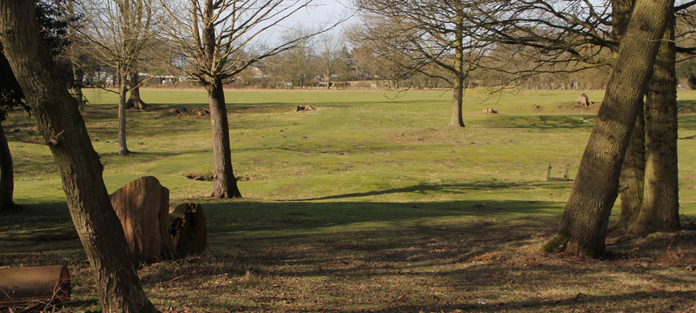 Large paddocks offer plenty of space for exercise and playtimes.